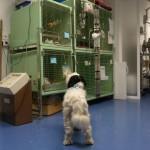 Unser Praxishund Merle