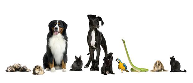 Leistungen Tierarzt Heidelberg